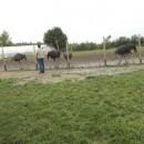 Straußenfarm0920150001