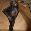 Neandertal21.3.180008